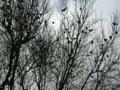 冬の雀の木